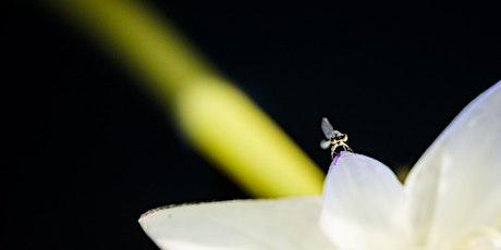 Scott Stramyk - Macro Flash Photography Workshop - Botanic Garden, ACT tickets
