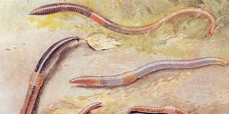 Exploring Earthworm Ecology  - Online Talk tickets