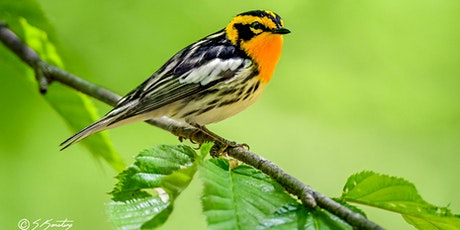 Wood Warblers - Identification, Ecology, and Conservation tickets