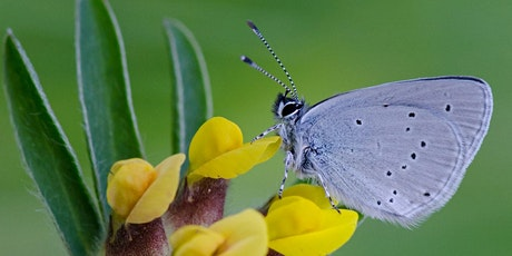 Butterfly identification and monitoring workshop - online tickets