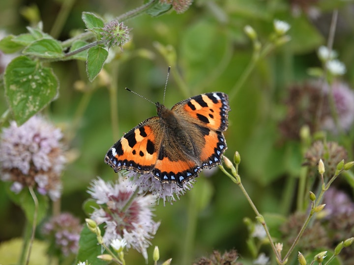 Life on the Edge: creating and managing wildlife-friendly verges image