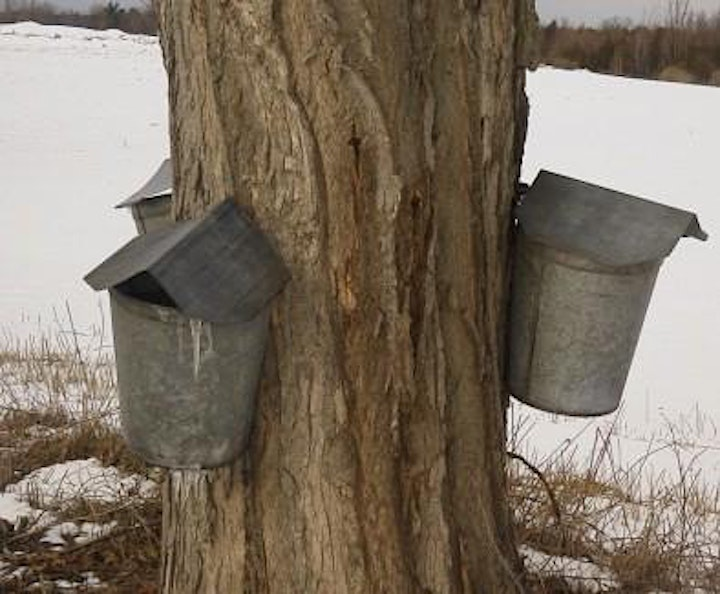 Virtual Field Trip with Ashokan Center: Maple Sugaring Science & History image