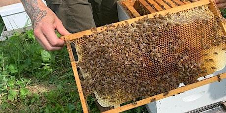 Beekeeping  Basics & Hive Tour tickets