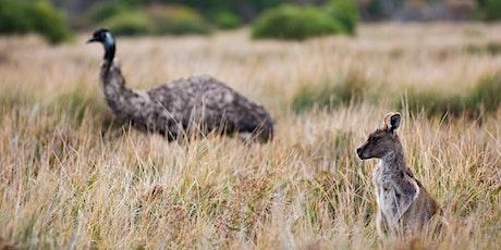 Junior Rangers Wildlife Detectives - Wilsons Promontory National Park tickets