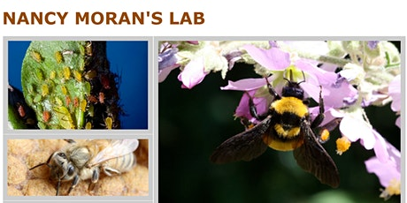 Social Insects of Austin with Nancy Moran's Lab at UT Austin tickets