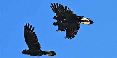 Junior Rangers Bird Brain - Wilsons Promontory National Park tickets