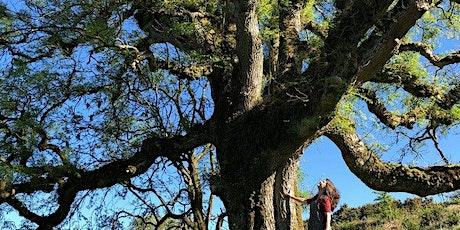 The World Tree | Virtual Performance Storytelling with Lisa Schneidau tickets
