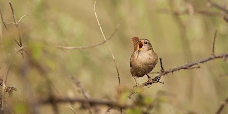 Not Quite the Dawn Chorus at RSPB Arne tickets