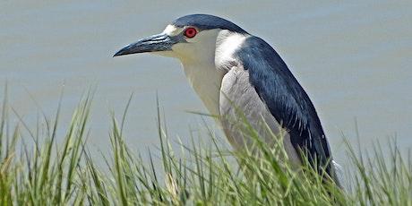 Bird Photography - an Introduction tickets