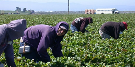 Seasonal workers across borders: farming needs, COVID-19 and immigration Tickets