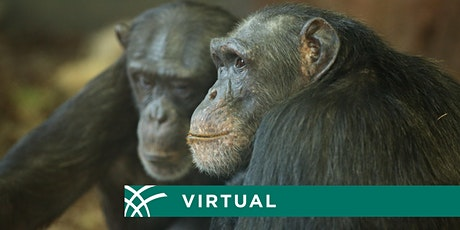 A Virtual Chat on the Science of Metabolism in Humans and Apes biglietti