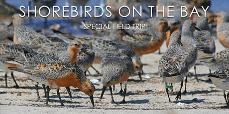 Shorebirds on the Bay tickets