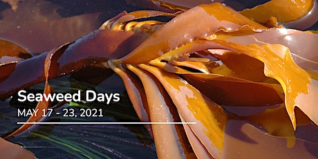 Seaweed Days Festival - All FREE events including a Top Secret Brand Launch ingressos