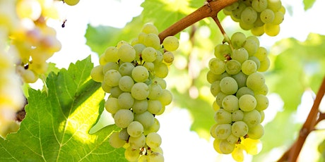 Wine Tasting Event - Sauvignon Blanc tickets