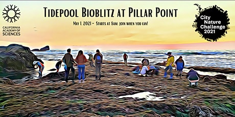 Pillar Point Tidepools Bioblitz for the City Nature Challenge tickets