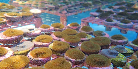 Coral Restoration at the Brinton Environmental Center tickets