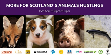 More For Scotland's Animals Hustings tickets