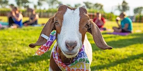Goat Yoga @ Tolino Winery tickets