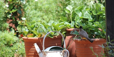 Edible Container Gardening tickets