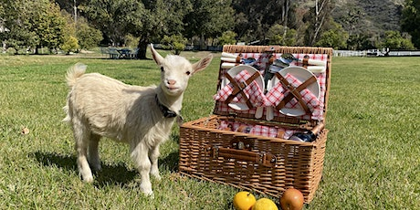 Private Goat Petting & Picnic for 2 people tickets