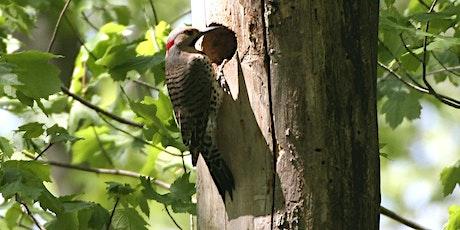 NJ Audubon Learning the Birds by Song 5 Webinar tickets