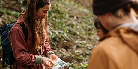 Spring Wild Herb Foraging Walk in Bristol - Stoke Park Estate tickets