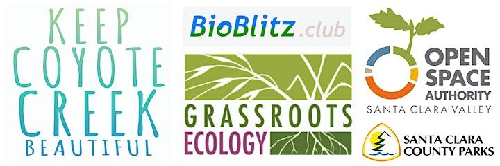 BioBlitz at Almaden Quicksilver image