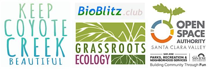 Virtual BioBlitz at Kelley Park image