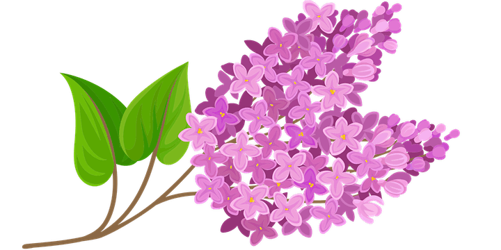 Lilac Therapy image