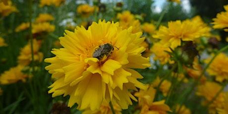 2021 Pollinator Week - Lori Weidenhammer tickets