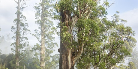 The Tasmanian Big Tree Hunters Film Premiere & Big Tree Forum tickets