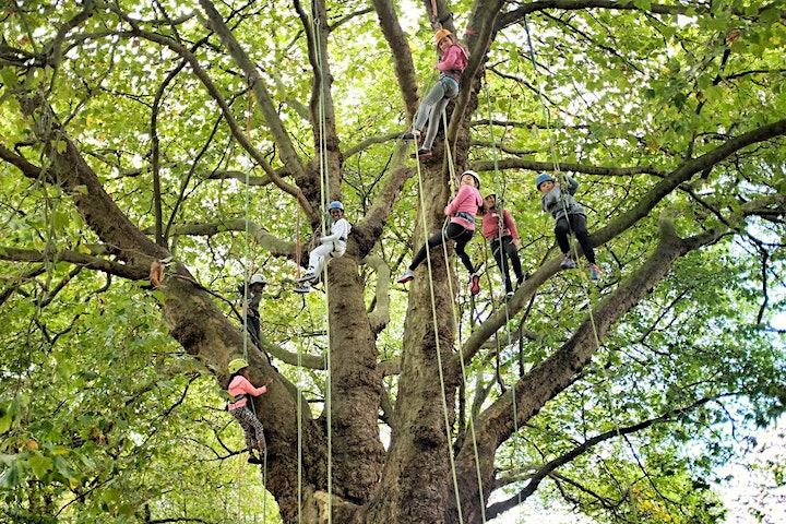 GIANT Tree Climbing Song Sessions - Epping Forest image
