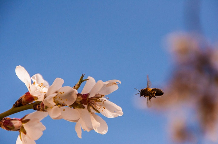 Imagen de Lo que querías saber sobre las abejas y nunca te planteaste