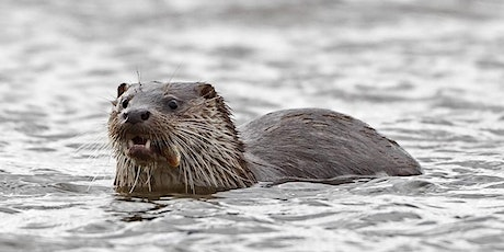 An Introduction to the Eurasian Otter tickets