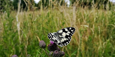 Big City Butterflies - discovering London's wildlife tickets