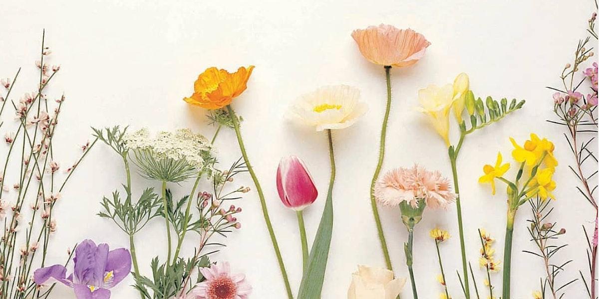 Starting a Cutting Garden with Wild Flower