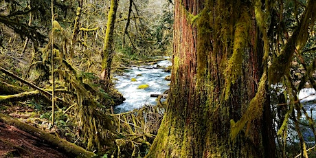 Western Redcedar: Cultural and ecological reflections and dieback concerns tickets