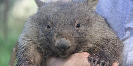 Wombats and Wildlife Magnetism tickets