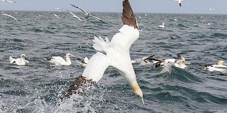 RSPB Diving Gannet Cruises, Bempton Cliffs tickets