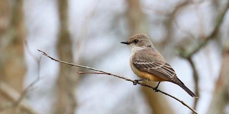 Birding at Burden 2021 tickets