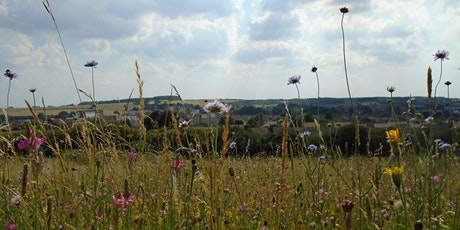 Natural Mindfulness Walk at Blow's Downs tickets
