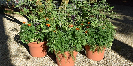 Green Stick Workshop: Container Gardens for Every Season tickets