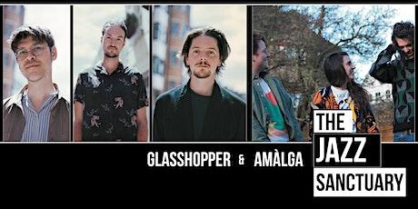 Glasshopper plus Amalga tickets