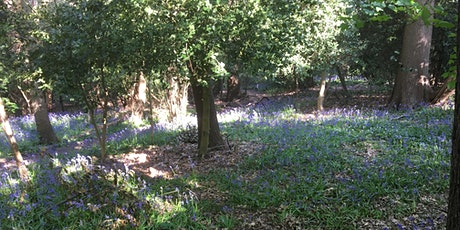 Wild Bluebells of Beckenham Place Park tickets