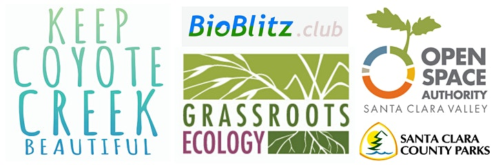 BioBlitz at Hellyer Park image