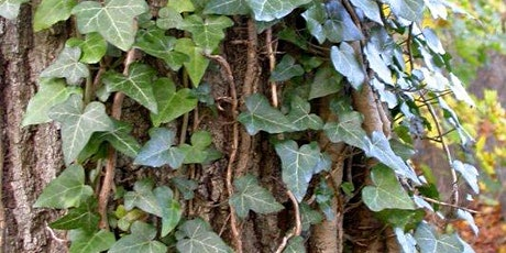 Invasive Vines Removal at Tarrytown Lakes tickets