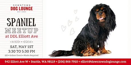 Spaniel Meetup at DDL Elliott tickets