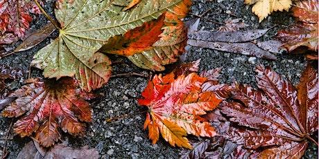 Photowalk – Autumn Colour tickets