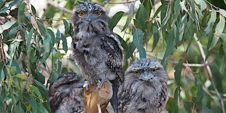 Nocturnal Wildlife Walk tickets