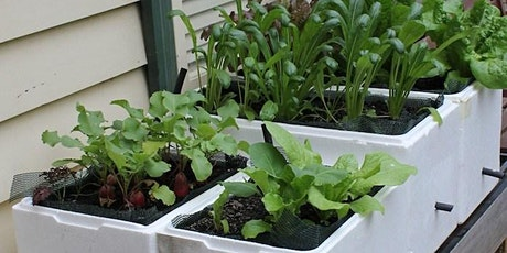 Wicking beds in small spaces tickets